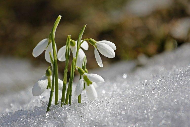 Какой будет погода в марте, рассказали в Гидрометцентре
