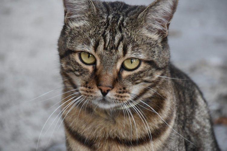 Ученые: интернет-популярность кошек ломает им жизнь