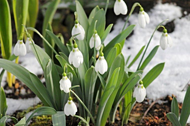 Прогноз погоды: Весна в Башкирию придет 25 февраля