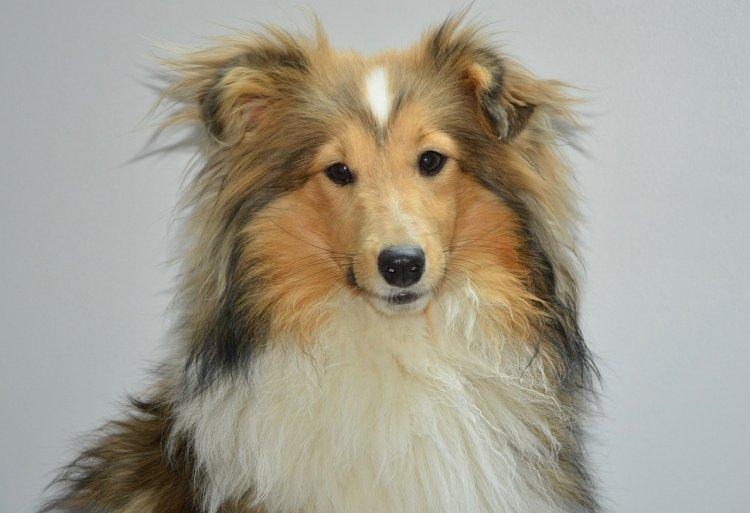 Забота и дружба: ТОП-3 самых ласковых собак