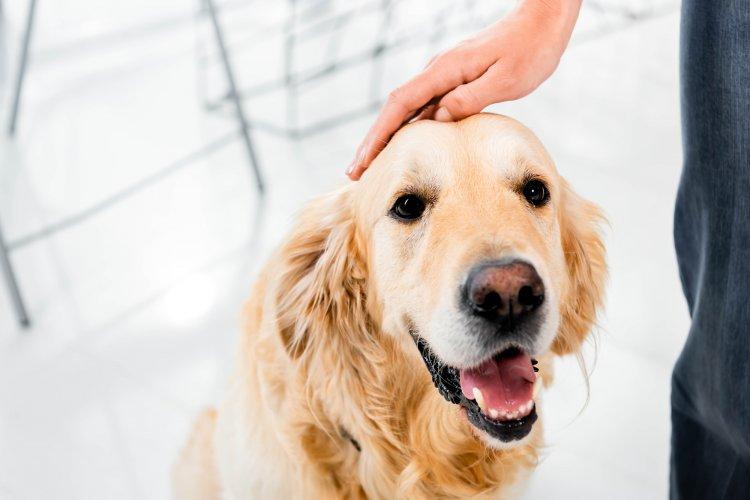 Учёные описали новую «суперспособность» носа собаки