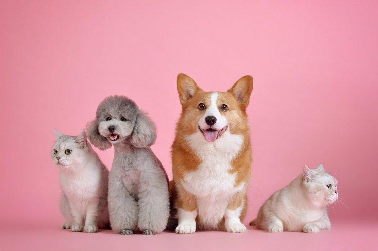 Кошка или собака: Ваш ответ многое расскажет о вашем характере