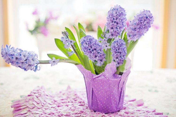 Какие цветы в доме избавят от негатива, вылечат и призовут удачу