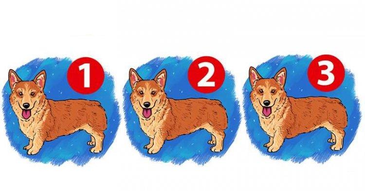 Одна собака на фото отличается, но найти её за 10 секунд удастся не всем
