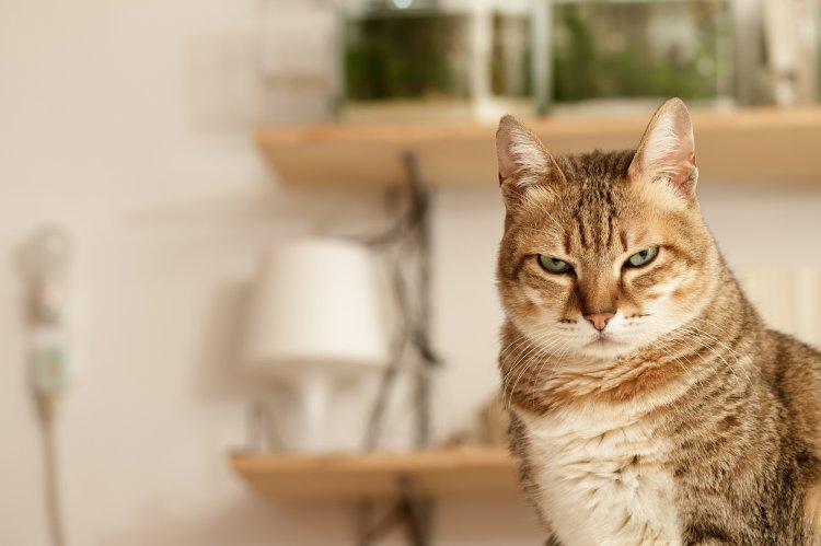 Чего не должно быть в доме, где живет кошка