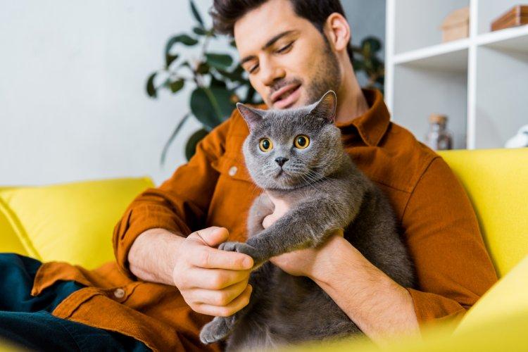 Какие породы кошек считают самыми спокойными и ласковыми