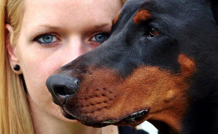 Каких собак опасно держать в квартире