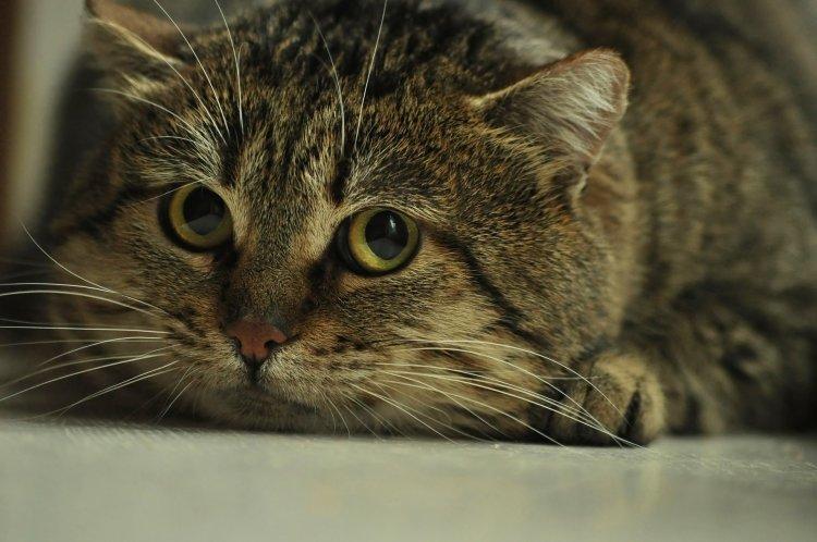 5 вещей, пугающих кошек: наказание, чужаки, «конкуренты»