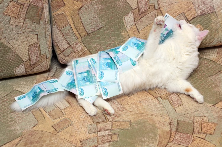 Деньгами хоть умывайся: 5 денежных примет, связанных с кошками