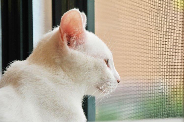 Почему кошки любят сидеть у окна?