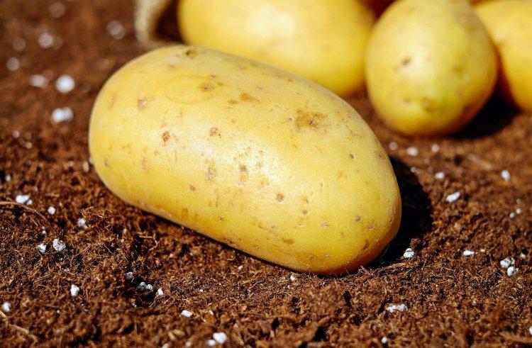 В Башкортостане посадили 460 гектаров картофеля