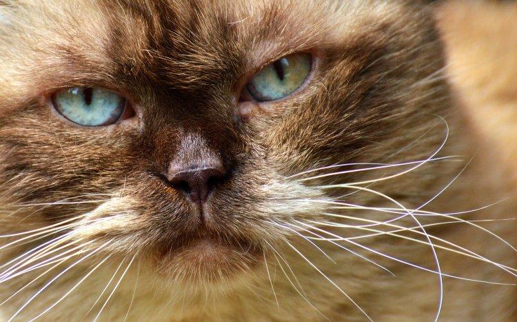 Топ-3 кошки-ревнивицы