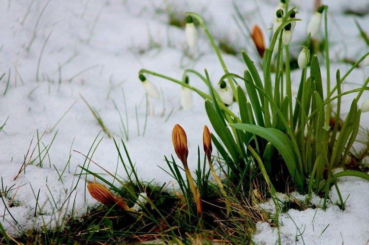Ночью в Башкирии выпал снег