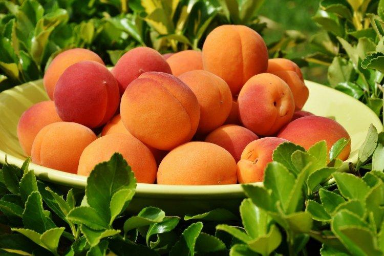 Врач-диетолог рассказала, чем опасны абрикосы