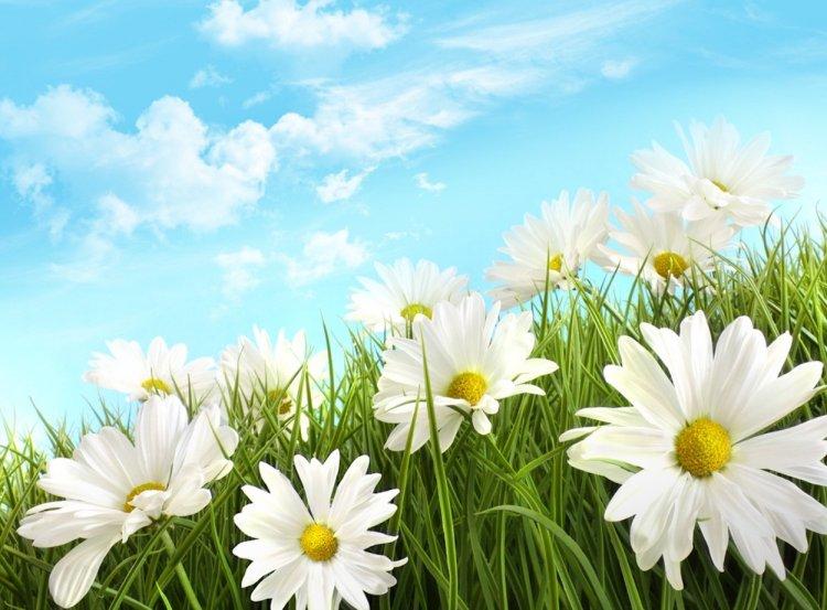 Синоптики рассказали, какая погода ожидается в июне в Башкирии