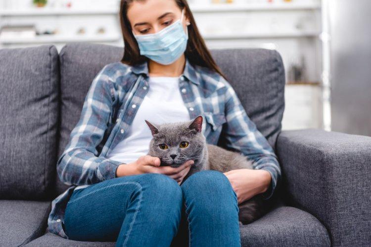 Названы симптомы нового коронавируса у домашних животных