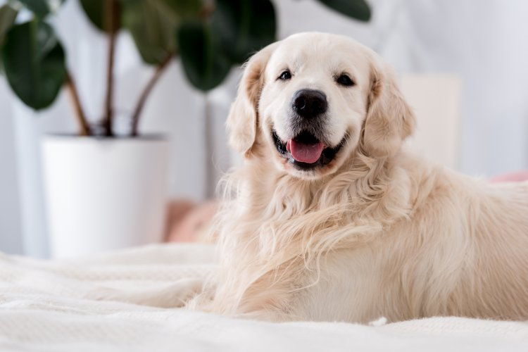 Самые ласковые породы собак: они будут рады стать членами вашей семьи