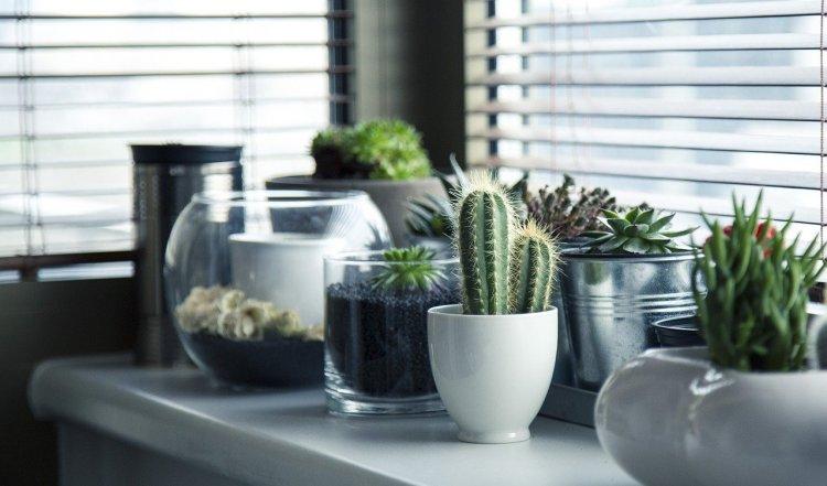 Энерговредители: уберите эти растения из дома, чтобы избавиться от бед, неудачи и безденежья