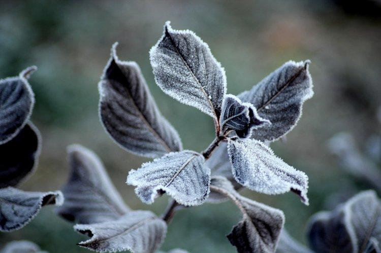 В Башкирии ожидаются ночные заморозки