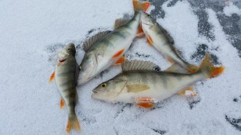 В Стерлитамакском районе пройдет открытый фестиваль по зимней ловле рыбы