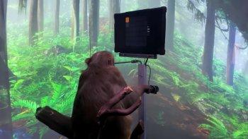 Компания Илона Маска Neuralink показала чипированную макаку, управляющую джойстиком силой мысли