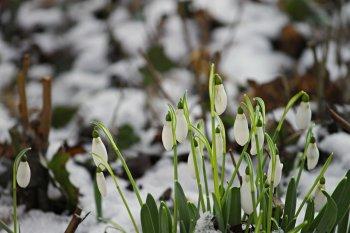 В Башкирию идет резкое похолодание со снегом
