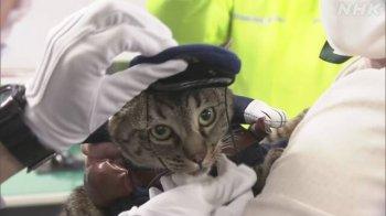 Кошка спасла человека и стала главой полицейского управления в Японии