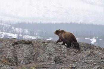 Из-за аномальной жары на территории Башкирии раньше времени проснулись медведи