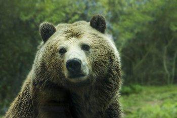 Cell: ДНК двух видов древних медведей впервые удалось извлечь из почвы в пещере
