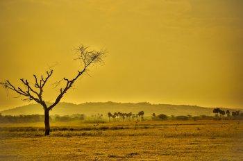 Глобальное потепление может вернуть планету Земля на 35 миллионов лет назад