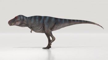 RSOS: Воссоздать походку тираннозавра впервые удалось голландским палеонтологам