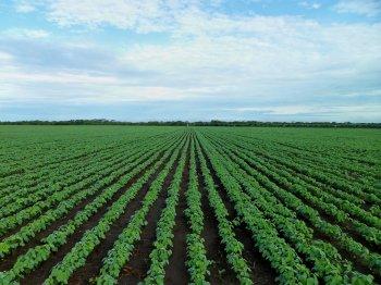Агрохолдинг инвестирует 195 млн в переработку сои на территории ОЭЗ «Алга» в Башкирии