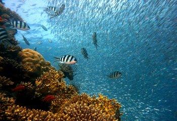 Phys.org: Впервые обнаружено морское животное асцидиан со способностью к полной регенерации