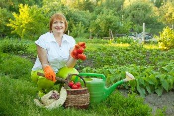 Крупные и вкусные помидоры вы будете собирать ведрами, если именно так будете опрыскать кусты