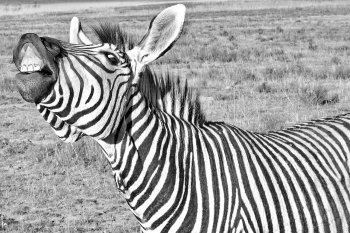 Bioacoustics: Смеяться как люди могут свыше 65 видов животных на Земле