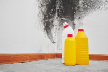 Граждан в России предупредили об опасности плесени на стенах квартиры