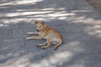 В топ-10 пород собак с самым крепким здоровьем вошли дворняги и бигли