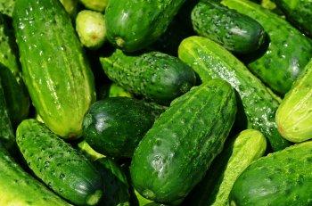 Как не уничтожить урожай огурцов: Названа ошибка дачников, которая губит все плоды