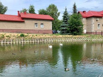 В Уфе в сад имени Аксакова вернулись лебеди-шипуны