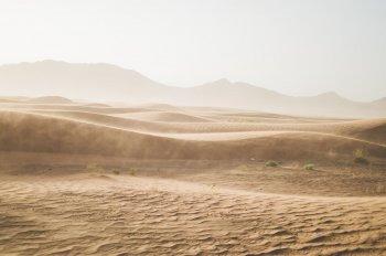 Новые данные по эволюции Homo sapiens выявили во время раскопок в пустыне Негев