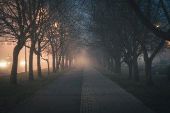 Швейцарские ученые впервые выяснили, почему деревья растут по ночам