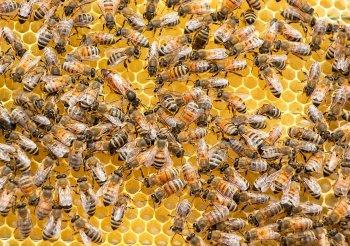 Россельхознадзор: массовая гибель пчел на территории Башкирии связана с обработкой полей пестицидами