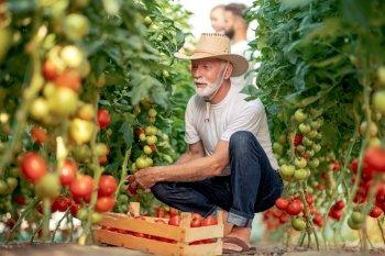 Крупные, сахарные и мясистые помидоры завяжутся на каждом кусте, если таким способом поливать томаты