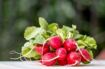 Дачникам и садоводам рассказали, что еще можно успеть посадить в августе