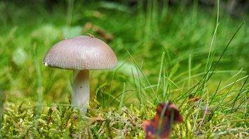 В Башкирии скончался отравившийся грибами 7-летний ребенок