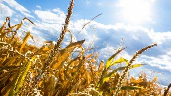 Башкортостан на международной выставке «Агрорусь» представит молодых фермеров