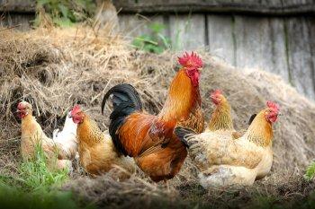Особый режим из-за угрозы вспышки птичьего гриппа ввели власти на территории Башкирии