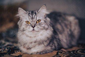 Поосторожнее с этими котиками: Названы 10 злых пород