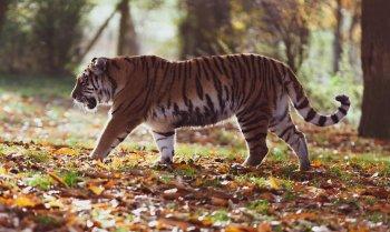 В России под угрозой исчезновения оказались 13 видов животных