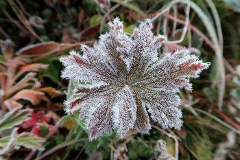 Заморозки до -6° и мокрый снег ожидаются на территории Башкирии
